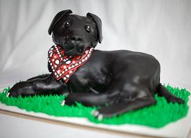 Kare 11 Raven Cake